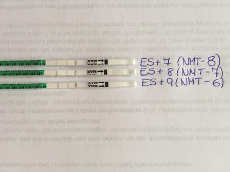 Leicht positiv ovulationstest Will an